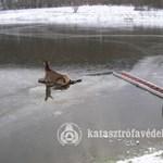 Szarvast mentettek ki a jégről - fotók
