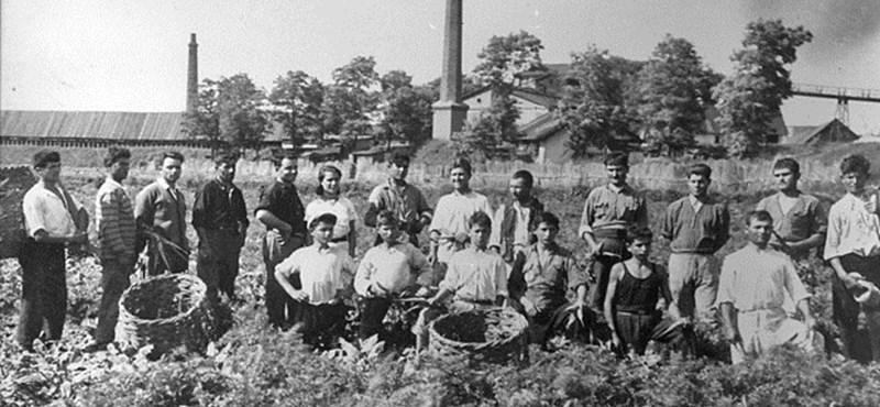 Bolgárkertész bevándorlók, akik elvették a magyarok munkáját