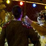 Kitiltották az állatidomárszámokat a bukaresti cirkuszból