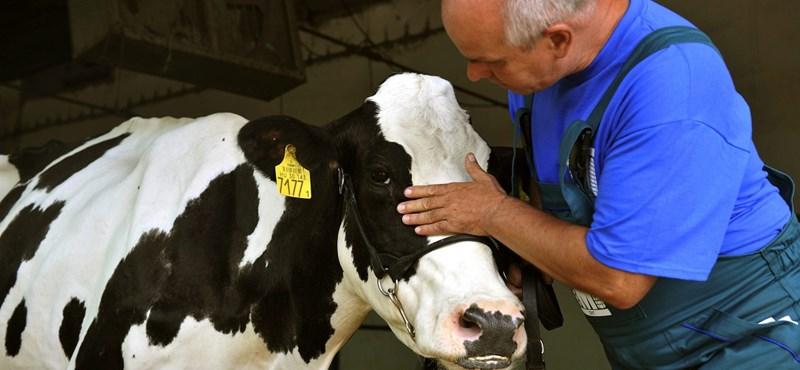 Áfa-csökkentéssel mentenék meg a vergődő tejipart