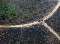 Egy kutatás szerint a trópusi esőerdők kétharmada már megszenvedte az emberi jelenlétet
