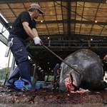 Hiába a tiltakozás, 177 bálnát gyilkoltak le a japánok