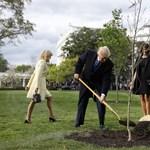 Hova tűnt Macron fája a Fehér Ház kertjéből?