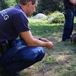 92, ketrecekben összezsúfolt kiskutyát foglalt le a rendőrség Barcson