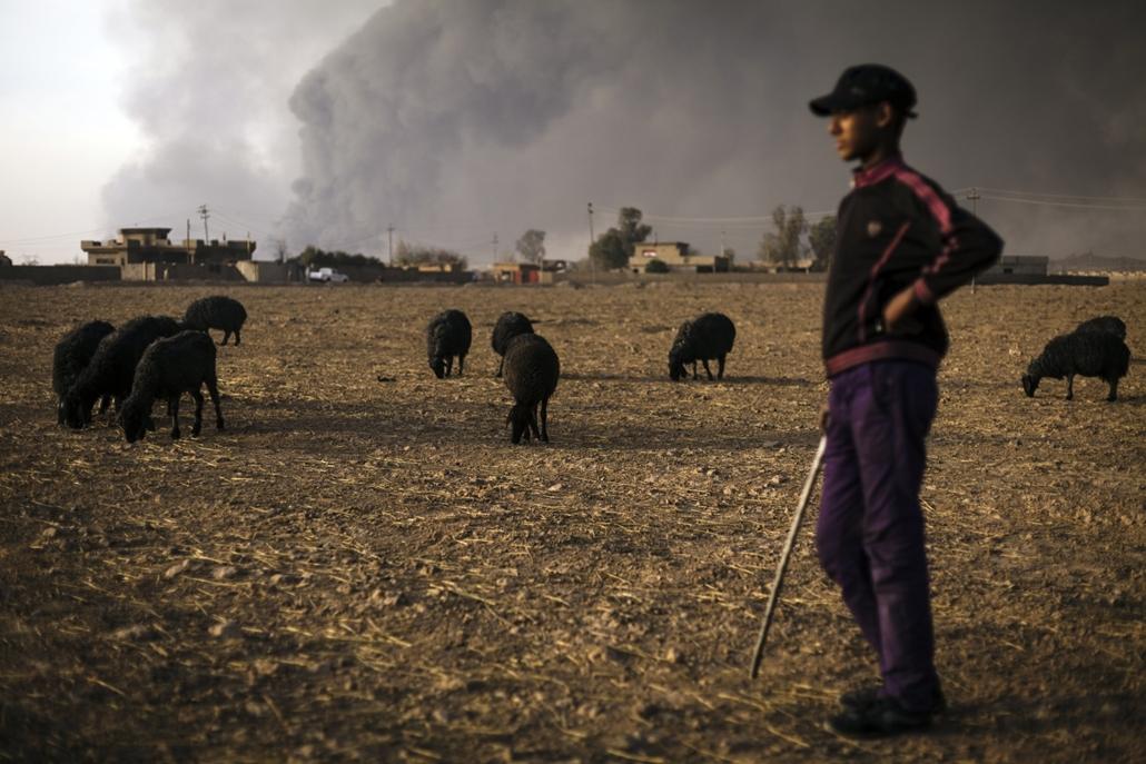 afp.16.11.12. Egy pásztorfiú őrzi nyáját, miközben a háttérben lángolnak az ISIS által felgyújtott olajmezők.
