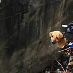 Videó: fogta magát a mérnök, és átépítette a drónt, hogy megmentse egy kiskutya életét – videó