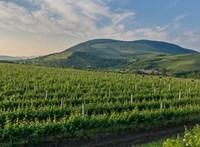 Tíz borász – egy műhely