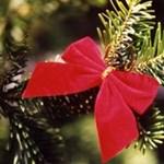 ÖkoÜnnep: idén lehet zöld a karácsony?