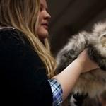 Macskatartással előzhető meg az állatallergia