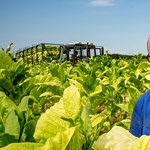 Dzsungelharcba keveredett a dohányföldön a Nemzet Napszámosa