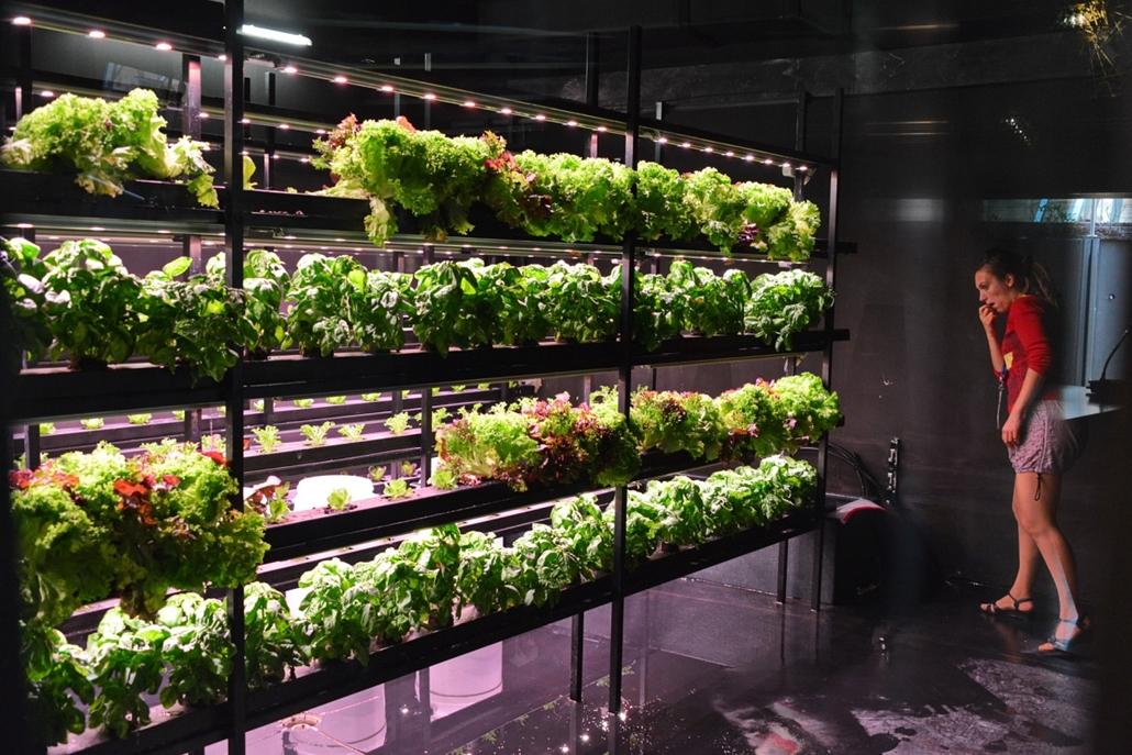 kka.15.05.0y. - Milánó, Olaszország: Világkiállítás - Azt, hogy hogyan lehet egy sötét pincében a napenergia felhasználásával növényt termesztenei, azt szintén a belgák tanították.