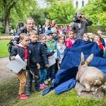 Fotók: Méretes nyúlszobrot avatott Szentgyörgyvölgyi polgármester