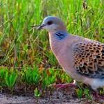 Ritka és szép madár tűnt fel Magyarországon