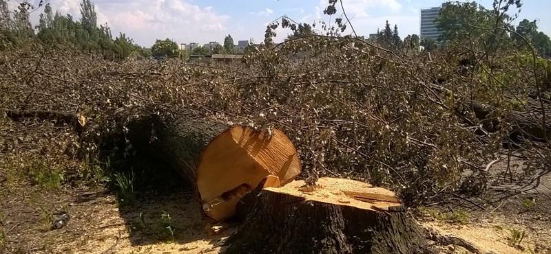 Fotók: Drámai pusztítást végeztek a Dagálynál
