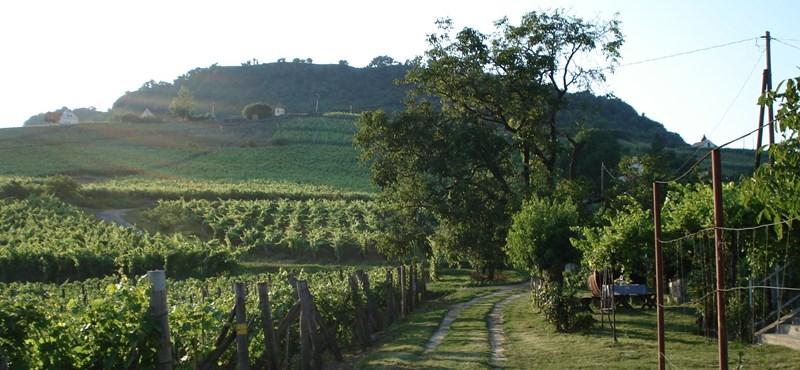 Fesztiválozik a nászéjszakák bora