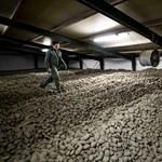 Kiöntött tej, krumplihegyek, leölt állatok: rég látott válságot hozott a járvány az élelmiszereknél