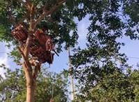 Fára költözött a covidos indiai fiú, hogy védje a családját