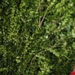 Monica Lewinsky: azelnök szeretője