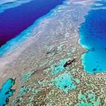 Elrendelték a legmagasabb riasztási szintet a korallfehéredés miatt