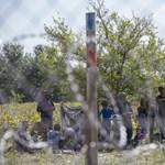 Az ügyészség nyomoz a Holt-Tiszába fulladt szíriai ügyében