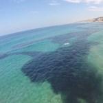 Meglepődtek a tengerkutatók: mégsem olaj volt az óriási folt – videó