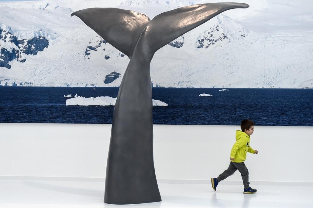 afp.17.02.23. - Prémanon, Franciaország: Bálna farka egy kiállításon a Paul Emile Victor múzeumban a franciaországi Pérémanonban. Ez az első múzeum, mely állandó sarki és antarktiszi kiállítással várja a látogatókat. - 7képei