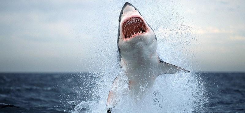 Lepofozta a cápát a szörfös, így élte túl a támadást