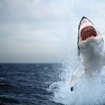Kettétépett és felfalt egy szörföst egy cápa Ausztráliában