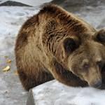 Aludt a család, a medve meg beindította a riasztót