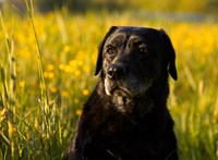 Kolbászba rejtett méreggel, csavarral, gyufával kínozza egy ismeretlen a kutyákat Pécelen