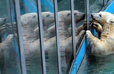Rendkívül olcsón mehetnek a gyerekek a budapesti állatkertbe