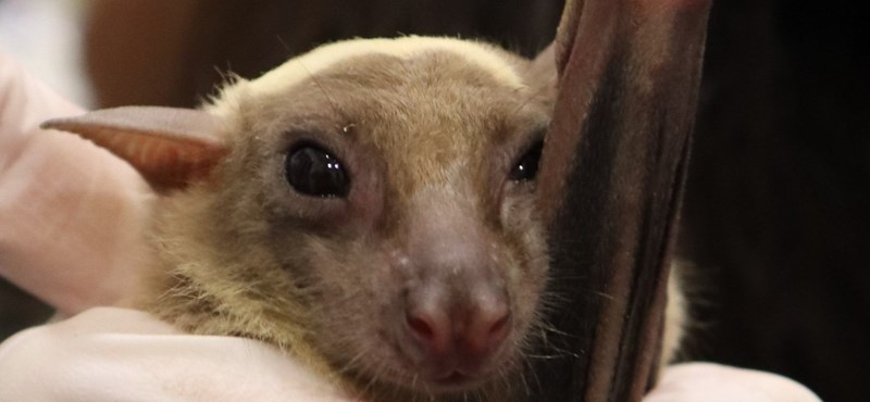 """Estudio israelí: """"Quédate en casa"""" Cuando los murciélagos se enferman"""
