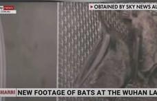 Sky News: Ez a videó bizonyítja, hogy Kína nem mondott igazat a koronavírus eredetéről