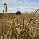 Megvan a gabonagéntérkép, amely segíthet túlélni a felmelegedést és a túlnépesedést