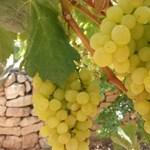 Kiderült, milyen bort ihatott Jézus