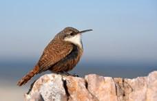Megcsappant India madárpopulációja