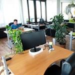 Hiányszakma-mizéria: Már az irodai sörcsapra sem ugrik az informatikus
