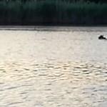 Tényleg egy medvét láttak úszni Szolnoknál?