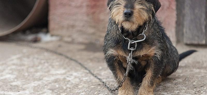 Kamara: Egy kutyát sem lehet elaltatni a láncrendelet miatt