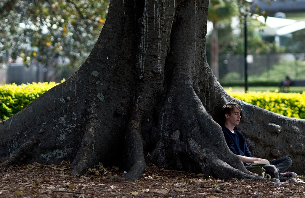 Fák világnapja - AUSTRALIA, Sydney : A man takes a nap under a tree in Victoria Park in Sydney on December 30, 2012. A recent report shows Sydney's ranking has consistently placed in the top 10 liveable cities in the world, scoring well for having low pol
