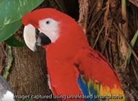 Ezt a videót már a Huawei P30 Próval forgathatták, és lenyűgöző lett a végeredmény