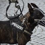 Cipőt kapnak a rendőrségi ebek: kutya meleg van Svájcban