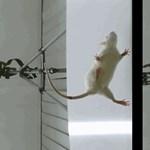 Magyar kutatóorvosok áttörést értek el a tartós izomgörcsök kezelésében