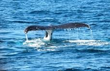 Most Szicíliánál pusztult el egy bálna, aminek a gyomra tele volt műanyaggal