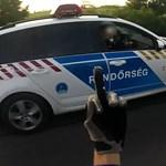 Egykerekező motoros intett be a szirénázó magyar rendőrautónak – videó