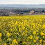 Fotó: Teljesen megzavarodtak a növények a tavaszias időjárástól