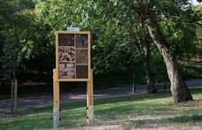 Három új rovarhotelt helyezett ki Budapesten a Főkert
