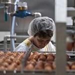 70 ezer tonna tésztát ont majd magából évente az új Gyermelyi-gyár