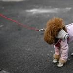 Pozitív lett egy kutya koronavírus-tesztje