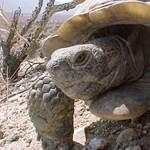 Alsónadrágjában hordta teknősét egy kínai fiú